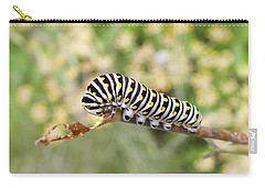 Eastern Black Swallowtail Caterpillar  Carry-all Pouch