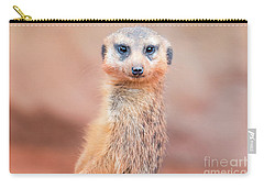 Meerkat Carry-all Pouch by Stephanie Hayes