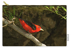 Scarlet Tanager Carry-all Pouch by Alan Lenk