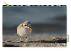Snowy Plover Carry-all Pouch by Meg Rousher