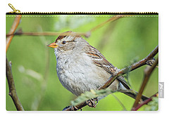 Sparrow Carry-all Pouch by Tam Ryan