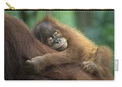 Sumatran Orangutan Pongo Abelii Two Carry-all Pouch by Suzi Eszterhas