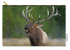 Carry-all Pouch featuring the photograph The Challenger by Sandra Bronstein