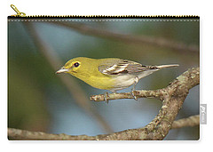 Yellow-throated Vireo Carry-all Pouch by Alan Lenk