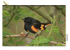 American Redstart Carry-all Pouch by Alan Lenk