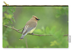 Cedar Waxwing Carry-all Pouch by Alan Lenk