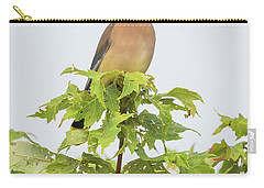 Cedar Waxwing Carry-all Pouch by Ricky L Jones