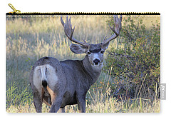 Carry-all Pouch featuring the photograph Looking Back by Shane Bechler