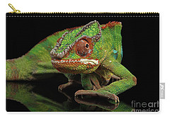 Sneaking Panther Chameleon, Reptile With Colorful Body On Black Mirror, Isolated Background Carry-all Pouch by Sergey Taran