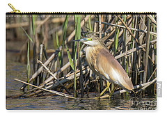 Carry-all Pouch featuring the photograph Squacco Heron - Ardeola Ralloides by Jivko Nakev