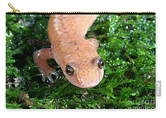 Spring Salamander Carry-all Pouch by Ted Kinsman