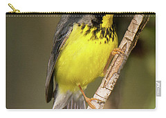 Canada Warbler Carry-all Pouch by Alan Lenk