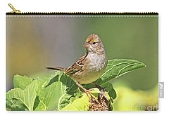 Golden -crowned Sparrow Carry-all Pouch