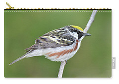 Chestnut-sided Warbler Carry-all Pouch by Alan Lenk