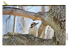 Carry-all Pouch featuring the photograph A Male Downey Woodpecker  1111 by Michael Peychich
