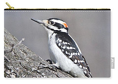 Carry-all Pouch featuring the photograph A Male Downey Woodpecker 1120 by Michael Peychich
