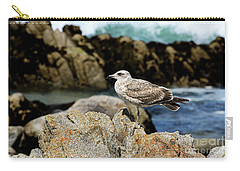Carry-all Pouch featuring the photograph A Young Western Gull At Pacific Grove by Susan Wiedmann