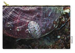 Carry-all Pouch featuring the photograph Abalone And Chiton by Adria Trail