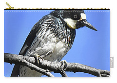Acorn Woodpecker Close Carry-all Pouch
