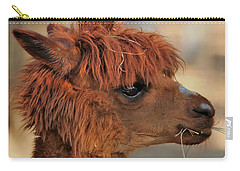 Alpaca Portrait Carry-all Pouch by Sheila Brown