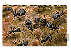 Ant Crematogaster Sp Group Carry-all Pouch by Mark Moffett