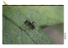 Carry-all Pouch featuring the photograph Ant by Heidi Poulin