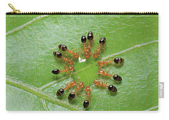 Ant Monomorium Intrudens Group Drinking Carry-all Pouch by Takashi Shinkai