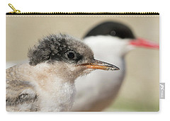 Carry-all Pouch featuring the photograph Arctic Tern Chick With Parent - Scotland by Karen Van Der Zijden