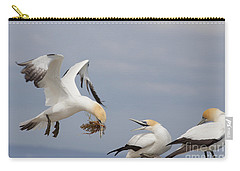 Australasian Gannet With Nesting Material Carry-all Pouch