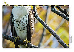 Autumn Red-tailed Hawk Carry-all Pouch by Ricky L Jones