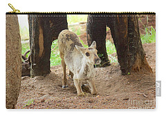 Carry-all Pouch featuring the photograph Baby Caribou Rising by Sean Griffin
