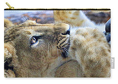 Baby Lion Carry-all Pouch by Steve McKinzie