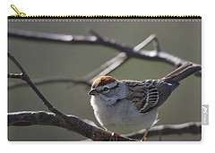 Carry-all Pouch featuring the photograph Backlit Chipping Sparrow by Susan Capuano