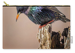 Backyard Birds European Starling Square Carry-all Pouch by Bill Wakeley