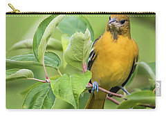 Baltimore Oriole Closeup Carry-all Pouch