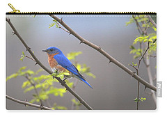 Beautiful Eastern Bluebird Carry-all Pouch