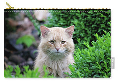 Carry-all Pouch featuring the photograph Beautiful Kitty by Trina Ansel