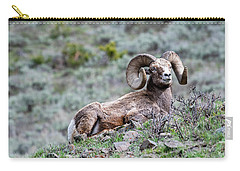 Carry-all Pouch featuring the photograph Big Horn Sheep #2 by Scott Read