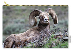 Carry-all Pouch featuring the photograph Big Horn Sheep #3 by Scott Read