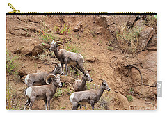 Big Horn Sheep Family Carry-all Pouch