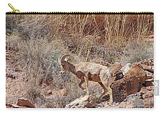 Bighorn Ram Of The Mountain Desert Carry-all Pouch