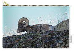 Bighorn Sheep Carry-all Pouch by Cindy Murphy - NightVisions