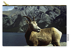 Carry-all Pouch featuring the photograph Bighorn Sheep by Sally Weigand