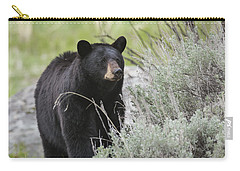 Black Bear Sow Carry-all Pouch