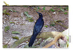Carry-all Pouch featuring the photograph Black Bird On Branch by Francesca Mackenney