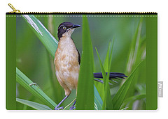 Black-capped Donacobius Carry-all Pouch