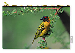 Black-headed Weaver Carry-all Pouch