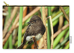 Black Phoebe Close Up Carry-all Pouch