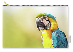 Blue And Yellow Macaw With Copy Space Carry-all Pouch