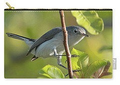 Blue Gray Gnatcatcher Carry-all Pouch